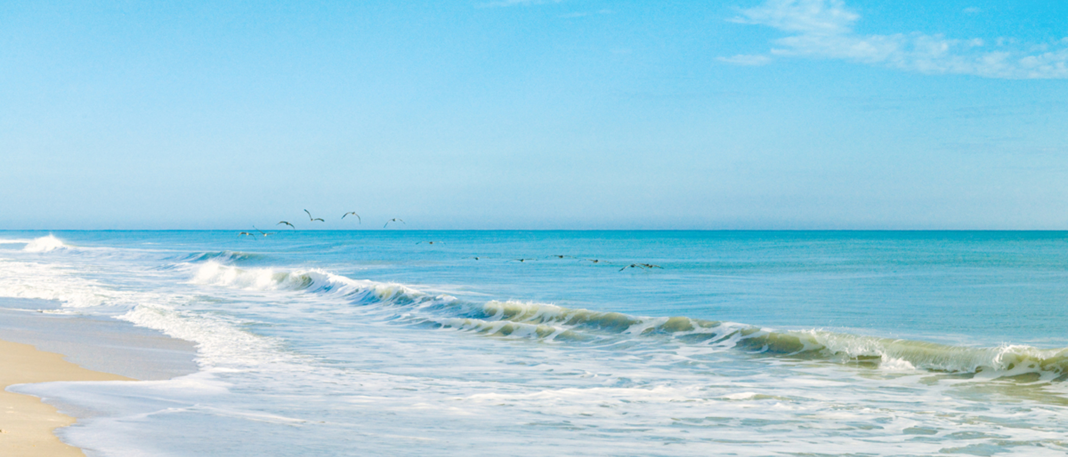 Pelicans At Vero Beach
